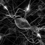 Tratamiento para la neuropatía por compresión del nervio radial