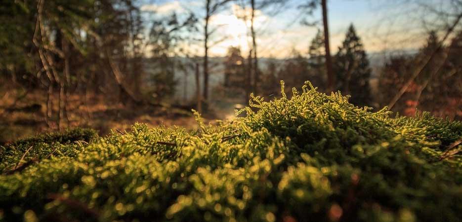 Las ventajas de los productos ecológicos