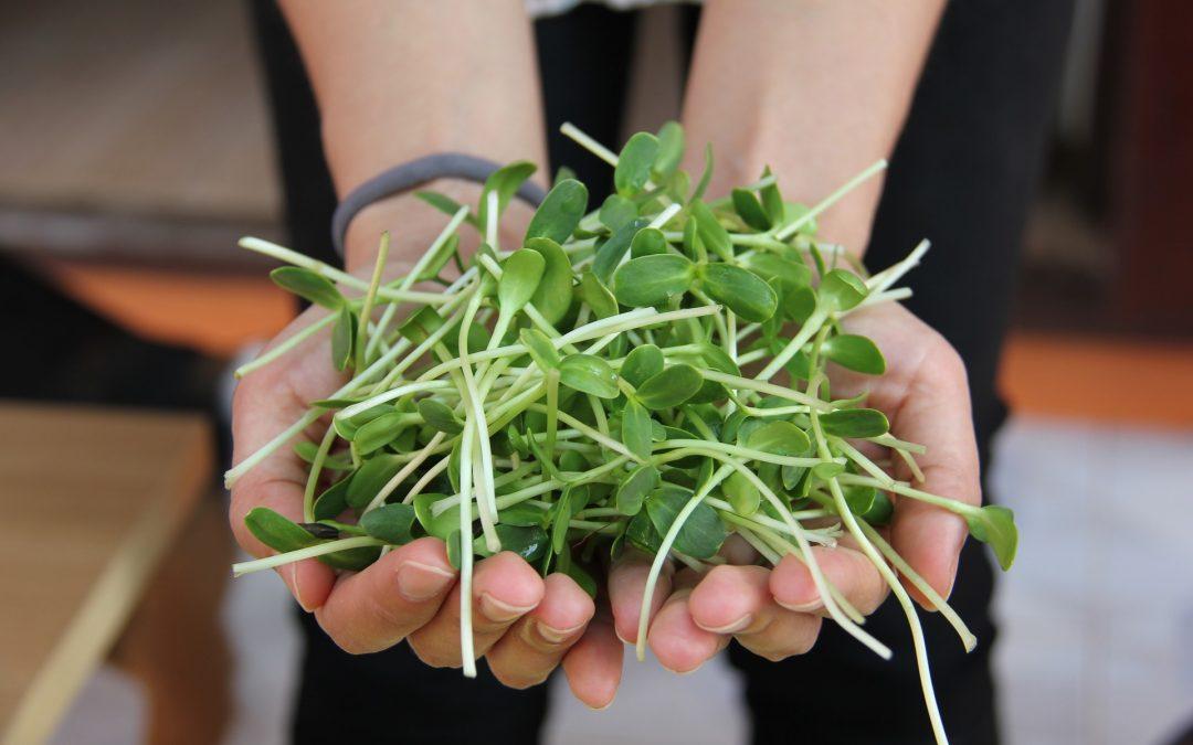 Semillas germinadas y brotes de plantas: 5 beneficios para la salud